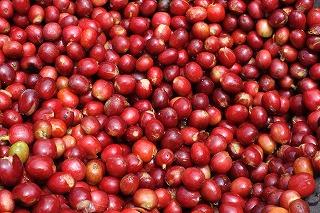 マンデリン ・ビンタンリマ400g(200g×2)受注焙煎コーヒー豆【豆/粉】コーヒーカップ30-40杯分:2190円
