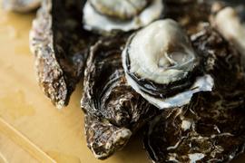 北海道サロマ湖産殻付き牡蠣5kg