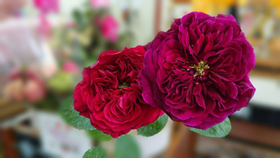 ミニ箱いっぱい切り花(赤系):3630円