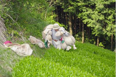 ③ ★新茶★ 達志さんの水出し煎茶ティーバッグ2袋 (3g30包入×2袋):2045円