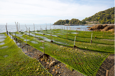 獅子島漁品 乾燥あおさのり(こま切れタイプ3袋セット):1620円