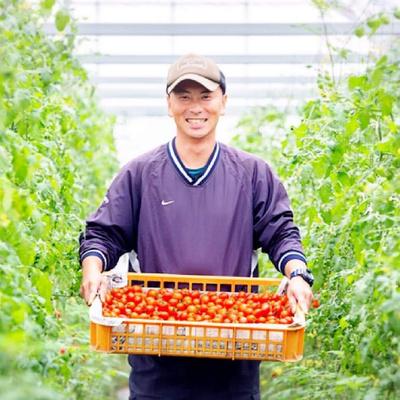 通年糖度8度以上ブランドミニトマト「アマメイド」 2kg
