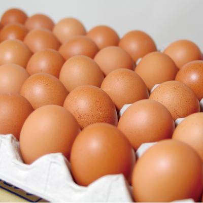 白鳳卵:50個入*コロナ支援専用【09/27(月)〜10/04(月)間に当店から出荷(お届け日は配送状況によりますが、出荷日の約1〜2日後となります)】:1680円
