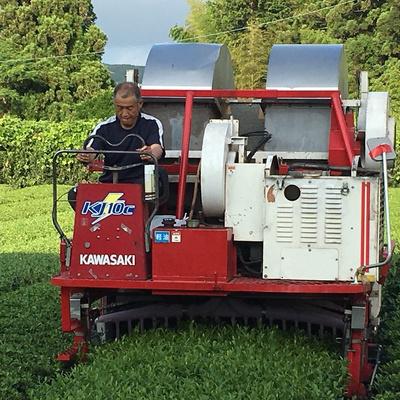 静岡自園無農薬栽培茶100g×10袋セット