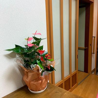 《4》アンスリウム9号浅鉢(高さ60cm×幅45cm ):5770円