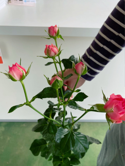 バラの色どりパック